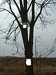 A kódok fája
