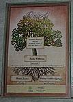 Oklevél a fa örökbefogadásáról