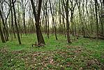 Kerek erdő közepében