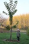Eszti fája 2015.11.05