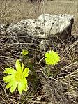 Tavasz hérics