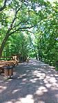 Sétány a parkban