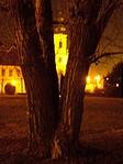 Ez is az a park és fa. Talán segít a templom.