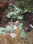 műanyag zsákok