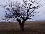 Vajon miért van itt ennek a fának a képe?