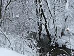 Bakonyi tél