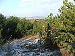 Geokaácsonyfa és környéke