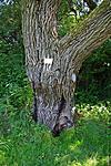 Az a fa nyáron