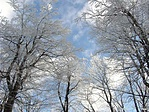 Az ősz fak