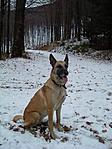 Bella a novemberi hóban a pihenőnél
