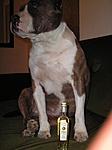 Panyolai + pitbull