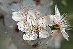 Virág közelebbről