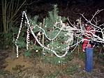 igazi! karácsonyfa