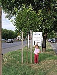 6 éves Viki és a fája